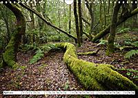 Gomera Traumlandschaften (Wandkalender 2019 DIN A4 quer) - Produktdetailbild 4