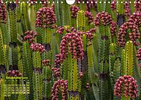 Gran Canaria - zwischen Wüste und Vegetation (Wandkalender 2019 DIN A4 quer) - Produktdetailbild 12