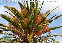 Gran Canaria - zwischen Wüste und Vegetation (Tischkalender 2019 DIN A5 quer) - Produktdetailbild 5