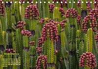 Gran Canaria - zwischen Wüste und Vegetation (Tischkalender 2019 DIN A5 quer) - Produktdetailbild 12