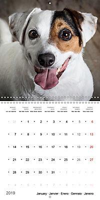 Great character dogs (Wall Calendar 2019 300 × 300 mm Square) - Produktdetailbild 1