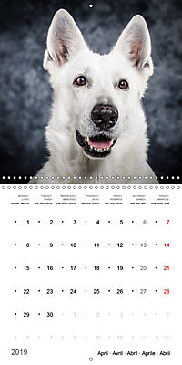 Great character dogs (Wall Calendar 2019 300 × 300 mm Square) - Produktdetailbild 4