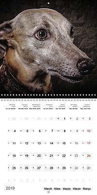 Great character dogs (Wall Calendar 2019 300 × 300 mm Square) - Produktdetailbild 3