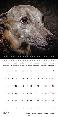 Great character dogs (Wall Calendar 2019 300 × 300 mm Square) - Produktdetailbild 3