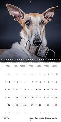 Great character dogs (Wall Calendar 2019 300 × 300 mm Square) - Produktdetailbild 6