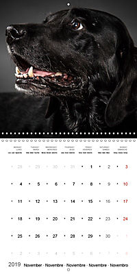 Great character dogs (Wall Calendar 2019 300 × 300 mm Square) - Produktdetailbild 11