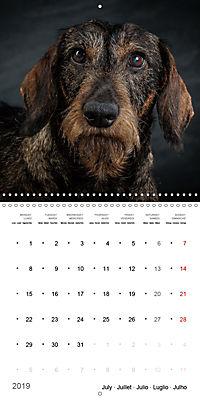Great character dogs (Wall Calendar 2019 300 × 300 mm Square) - Produktdetailbild 7