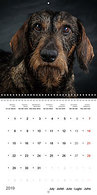 Great character dogs (Wall Calendar 2019 300 × 300 mm Square) - Produktdetailbild 7