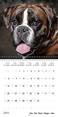 Great character dogs (Wall Calendar 2019 300 × 300 mm Square) - Produktdetailbild 5