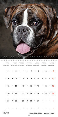 Great character dogs (Wall Calendar 2019 300 × 300 mm Square) - Produktdetailbild 5