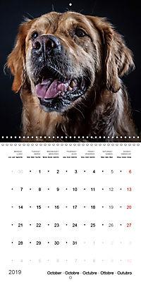Great character dogs (Wall Calendar 2019 300 × 300 mm Square) - Produktdetailbild 10