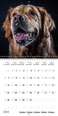 Great character dogs (Wall Calendar 2019 300 × 300 mm Square) - Produktdetailbild 10