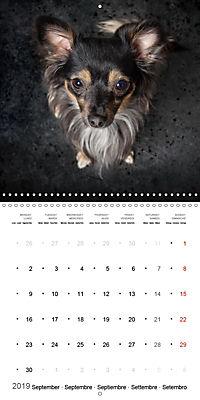 Great character dogs (Wall Calendar 2019 300 × 300 mm Square) - Produktdetailbild 9