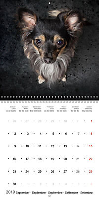 Great character dogs (Wall Calendar 2019 300 × 300 mm Square) - Produktdetailbild 9