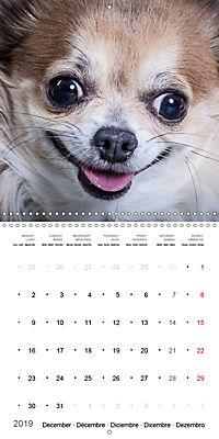 Great character dogs (Wall Calendar 2019 300 × 300 mm Square) - Produktdetailbild 12