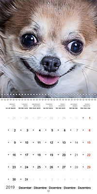 Great character dogs (Wall Calendar 2019 300 × 300 mm Square) - Produktdetailbild 12