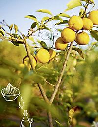 Greenbox - Tim Mälzers grüne Küche - Produktdetailbild 8
