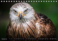 Greifvögel und Eulen (Tischkalender 2019 DIN A5 quer) - Produktdetailbild 2