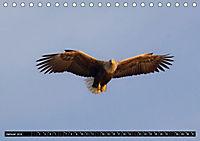 Greifvögel und Eulen (Tischkalender 2019 DIN A5 quer) - Produktdetailbild 1