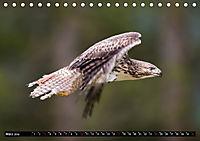 Greifvögel und Eulen (Tischkalender 2019 DIN A5 quer) - Produktdetailbild 3