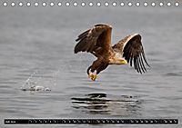 Greifvögel und Eulen (Tischkalender 2019 DIN A5 quer) - Produktdetailbild 7
