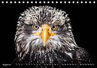 Greifvögel und Eulen (Tischkalender 2019 DIN A5 quer) - Produktdetailbild 8