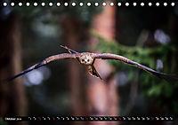 Greifvögel und Eulen (Tischkalender 2019 DIN A5 quer) - Produktdetailbild 10