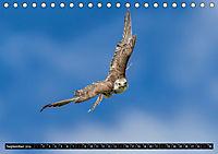Greifvögel und Eulen (Tischkalender 2019 DIN A5 quer) - Produktdetailbild 9