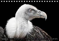 Greifvögel und Eulen (Tischkalender 2019 DIN A5 quer) - Produktdetailbild 11