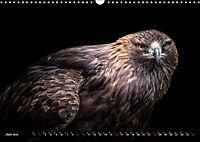 Greifvögel und Eulen (Wandkalender 2019 DIN A3 quer) - Produktdetailbild 6