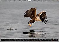 Greifvögel und Eulen (Wandkalender 2019 DIN A3 quer) - Produktdetailbild 7