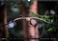 Greifvögel und Eulen (Wandkalender 2019 DIN A3 quer) - Produktdetailbild 10