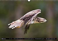Greifvögel und Eulen (Wandkalender 2019 DIN A3 quer) - Produktdetailbild 3