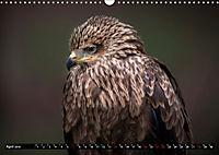Greifvögel und Eulen (Wandkalender 2019 DIN A3 quer) - Produktdetailbild 4