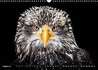 Greifvögel und Eulen (Wandkalender 2019 DIN A3 quer) - Produktdetailbild 8