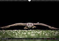 Greifvögel und Eulen (Wandkalender 2019 DIN A3 quer) - Produktdetailbild 12