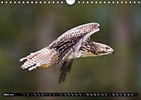 Greifvögel und Eulen (Wandkalender 2019 DIN A4 quer) - Produktdetailbild 3