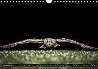 Greifvögel und Eulen (Wandkalender 2019 DIN A4 quer) - Produktdetailbild 12