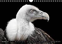 Greifvögel und Eulen (Wandkalender 2019 DIN A4 quer) - Produktdetailbild 11