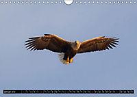Greifvögel und Eulen (Wandkalender 2019 DIN A4 quer) - Produktdetailbild 1