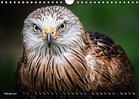 Greifvögel und Eulen (Wandkalender 2019 DIN A4 quer) - Produktdetailbild 2