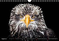 Greifvögel und Eulen (Wandkalender 2019 DIN A4 quer) - Produktdetailbild 8