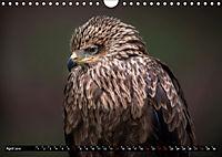 Greifvögel und Eulen (Wandkalender 2019 DIN A4 quer) - Produktdetailbild 4