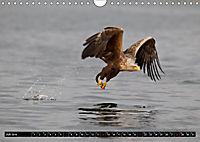 Greifvögel und Eulen (Wandkalender 2019 DIN A4 quer) - Produktdetailbild 7