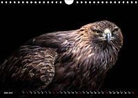 Greifvögel und Eulen (Wandkalender 2019 DIN A4 quer) - Produktdetailbild 6