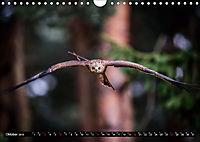 Greifvögel und Eulen (Wandkalender 2019 DIN A4 quer) - Produktdetailbild 10