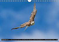 Greifvögel und Eulen (Wandkalender 2019 DIN A4 quer) - Produktdetailbild 9