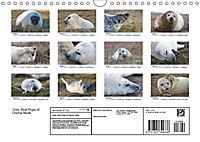 Grey Seal Pups of Donna Nook (Wall Calendar 2019 DIN A4 Landscape) - Produktdetailbild 13
