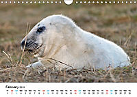 Grey Seal Pups of Donna Nook (Wall Calendar 2019 DIN A4 Landscape) - Produktdetailbild 2