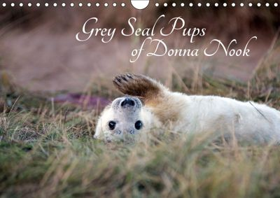 Grey Seal Pups of Donna Nook (Wall Calendar 2019 DIN A4 Landscape), Wendy Thompson-Moon